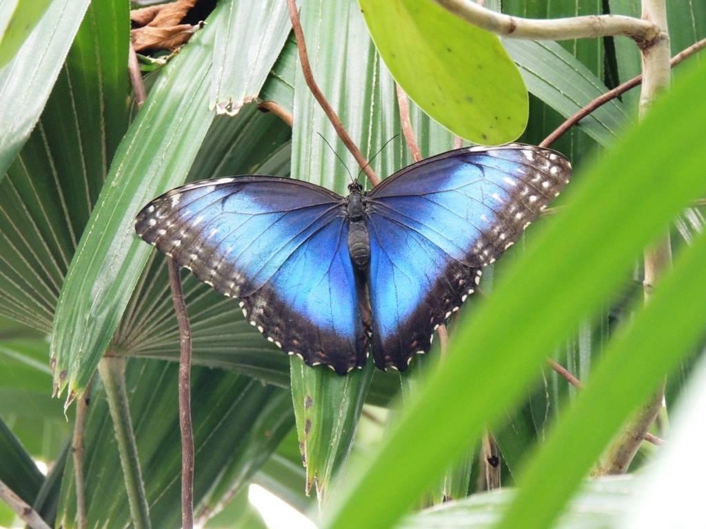 Самые красивые бабочки в мире – описание с фото