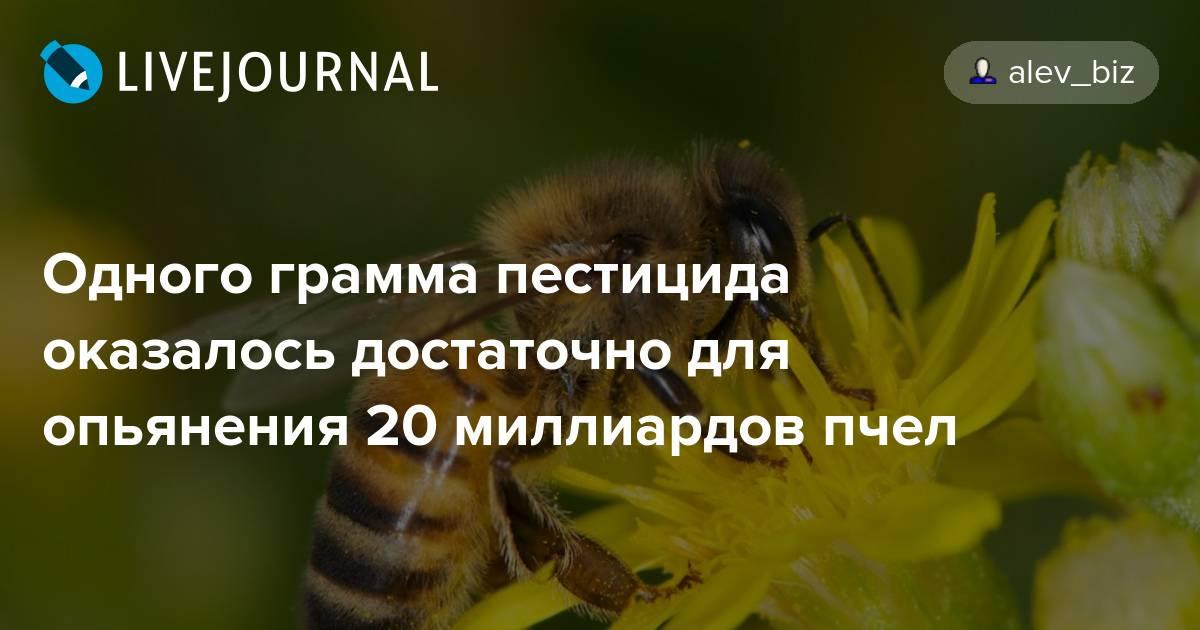 Что будет, если исчезнут пчёлы