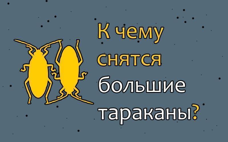 К чему снятся тараканы мужчине: что это значит, в квартире, на теле, маленькие, большие, летающие