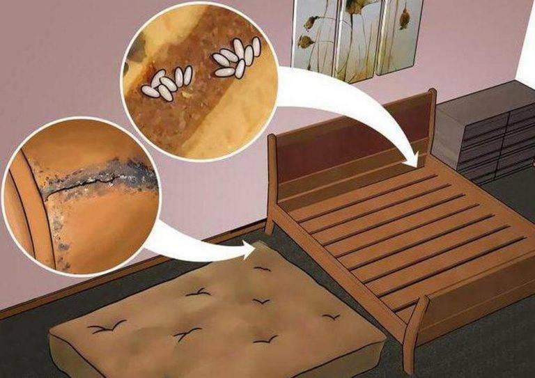 Как применять уксус против постельных клопов? помогает ли он?