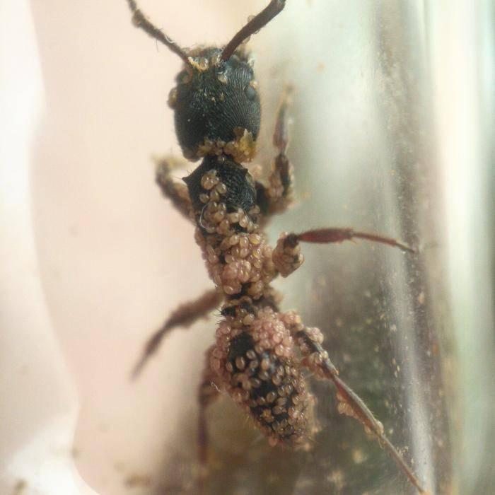 Как избавиться от муравьев в саду, в чем их вред и польза