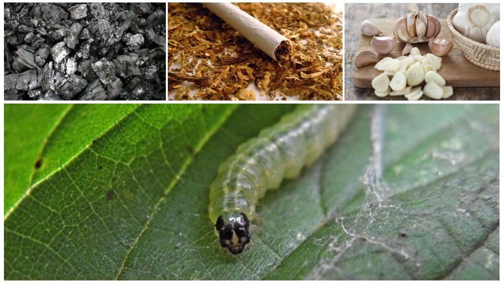 Борьба с гусеницами в саду и на огороде: как избавиться, препараты