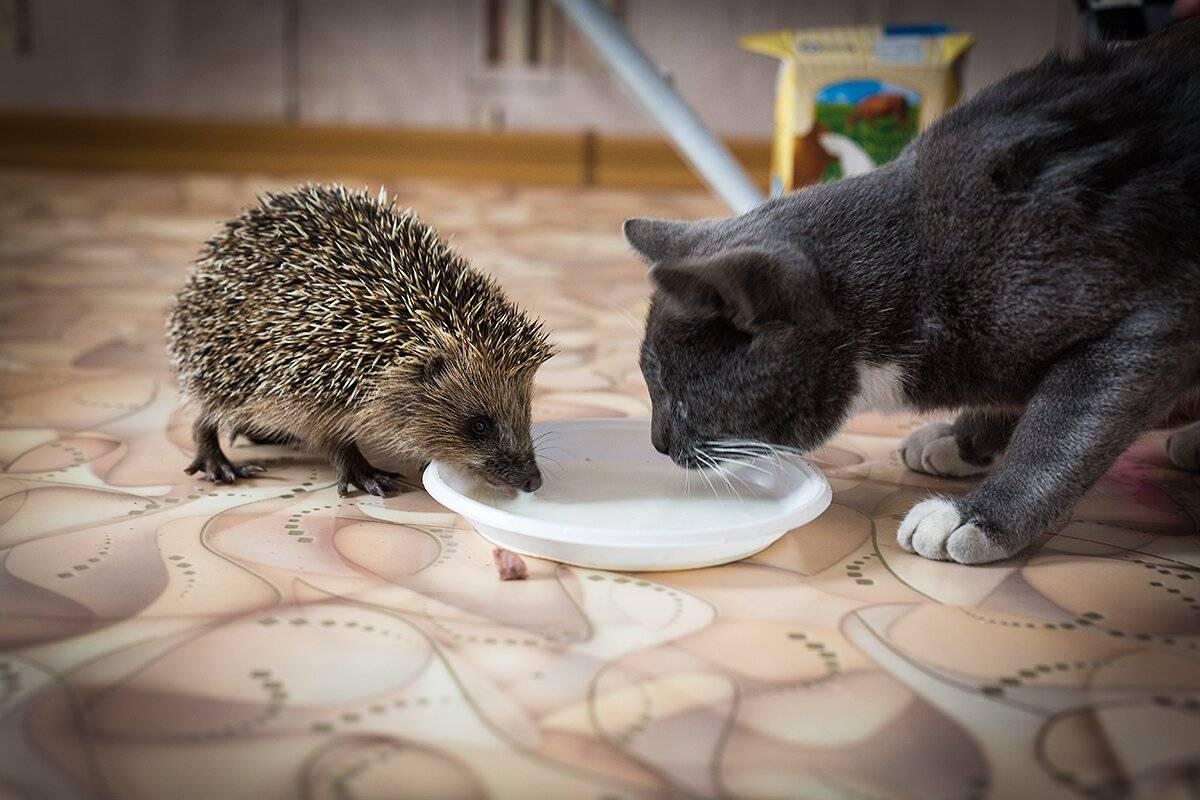 Сонник ежи ловят и едят мышей. к чему снится ежи ловят и едят мышей видеть во сне - сонник дома солнца
