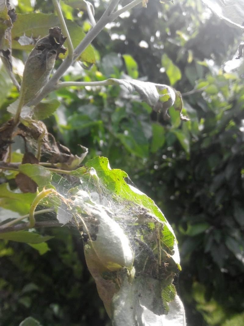 Чем обработать плодовые деревья весной