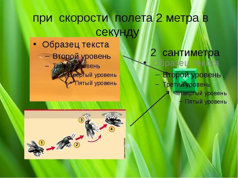 Как высоко летают комары и мухи. на какой высоте летают комары до какого этажа долетают насекомые