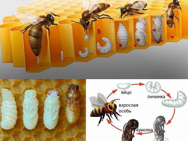 Почему мухи так быстро размножаются
