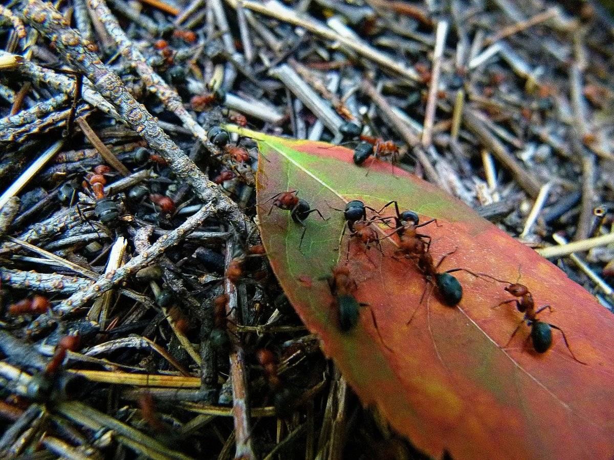 Как избавиться от муравьев на даче при помощи народных средств и ядохимикатов