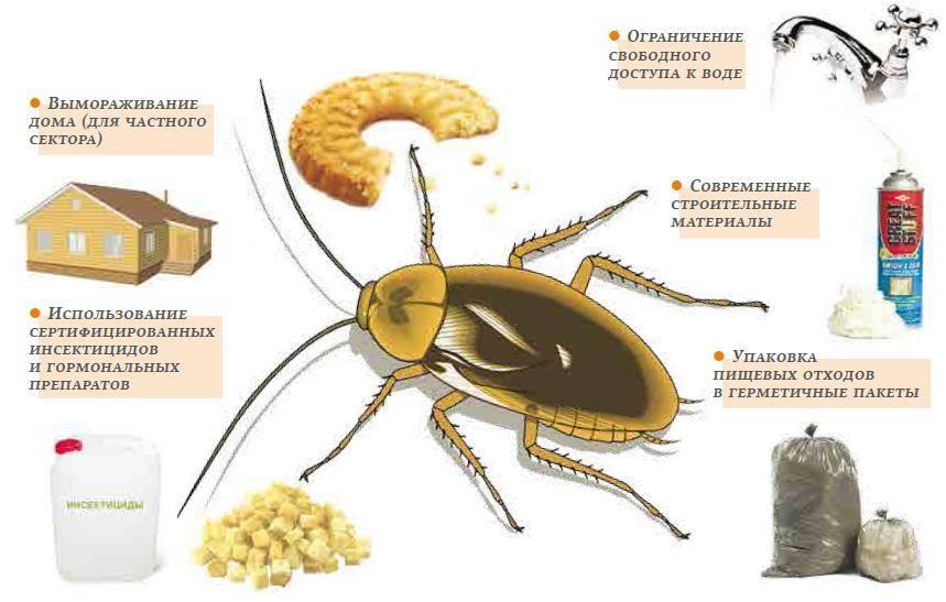 Как эффективно бороться с тараканами