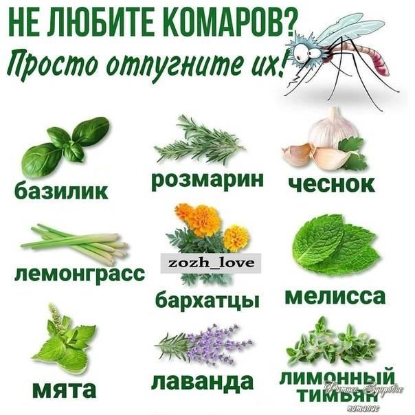 Какие растения помогут избавиться от насекомых-вредителей, что выращивать дома, чтобы избавиться от комаров, мух и прочих нежелательных насекомых