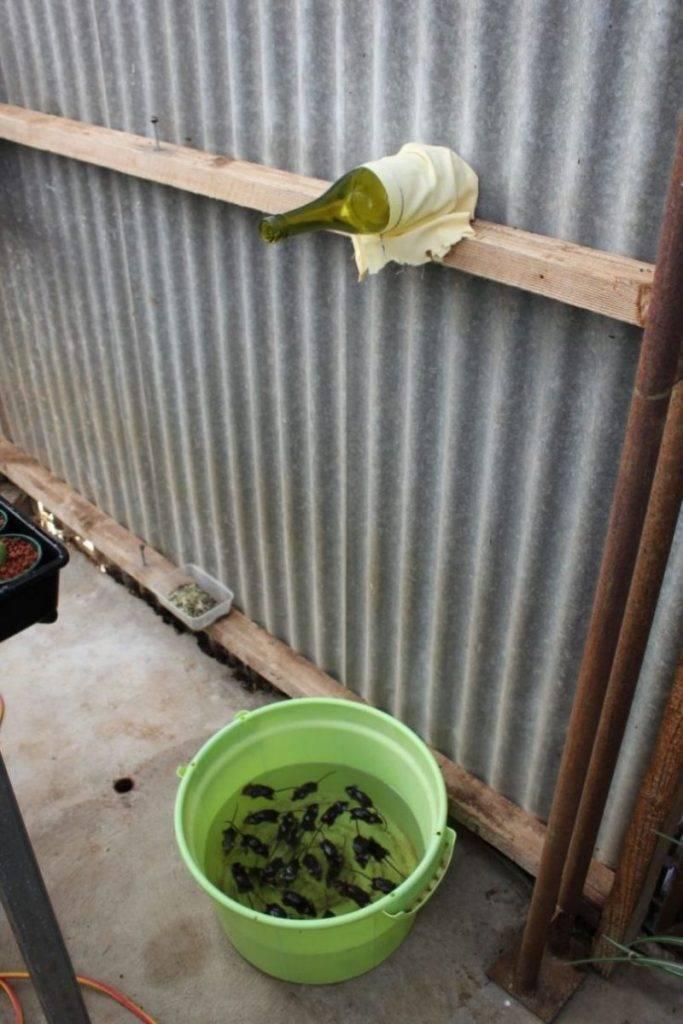 Как быстро вывести мух: аэрозоли, самодельные ловушки и растений