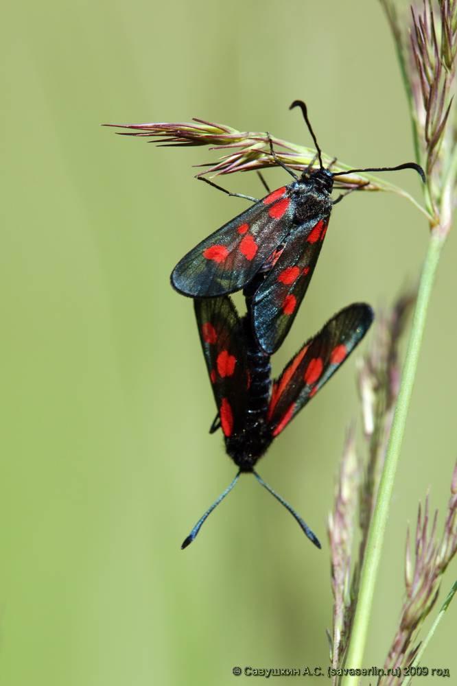 Виды бабочек, наносимый ими вред и способы борьбы