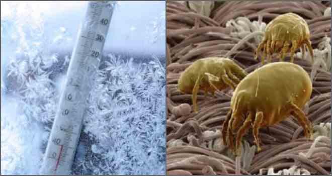 ❶ топ-12 средств избавления от пылевых постельных клещей: меса их обитания и откуда берутся