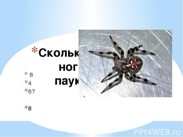 Пауки: сколько у них лап и какова их длина