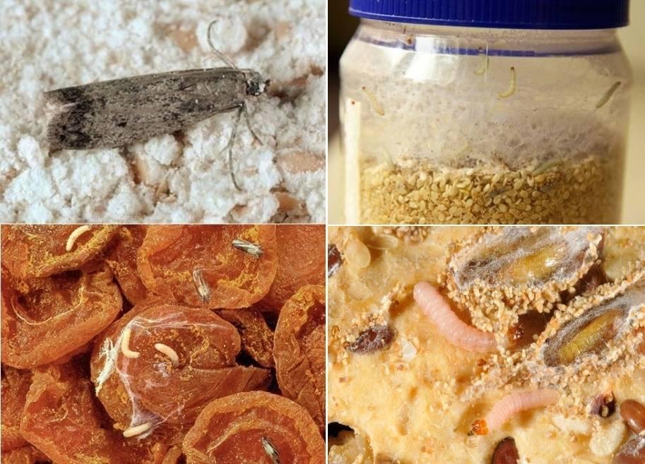 Моль на кухне: как избавиться без химии?