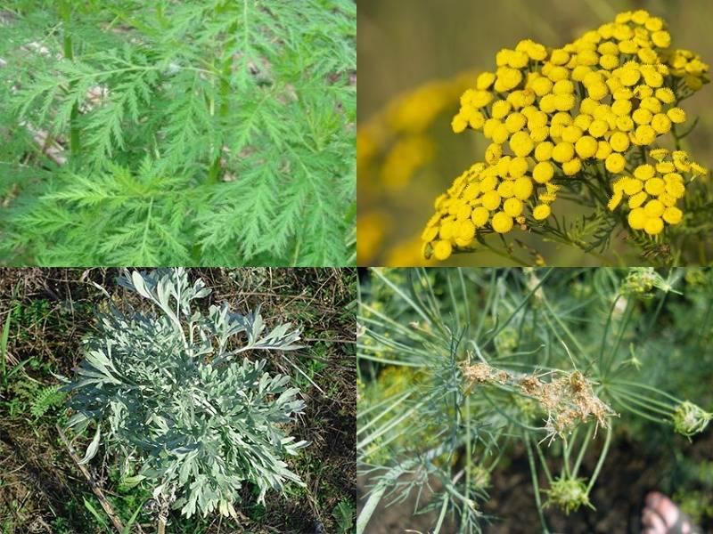 Растения, которые отпугивают насекомых и вредителей