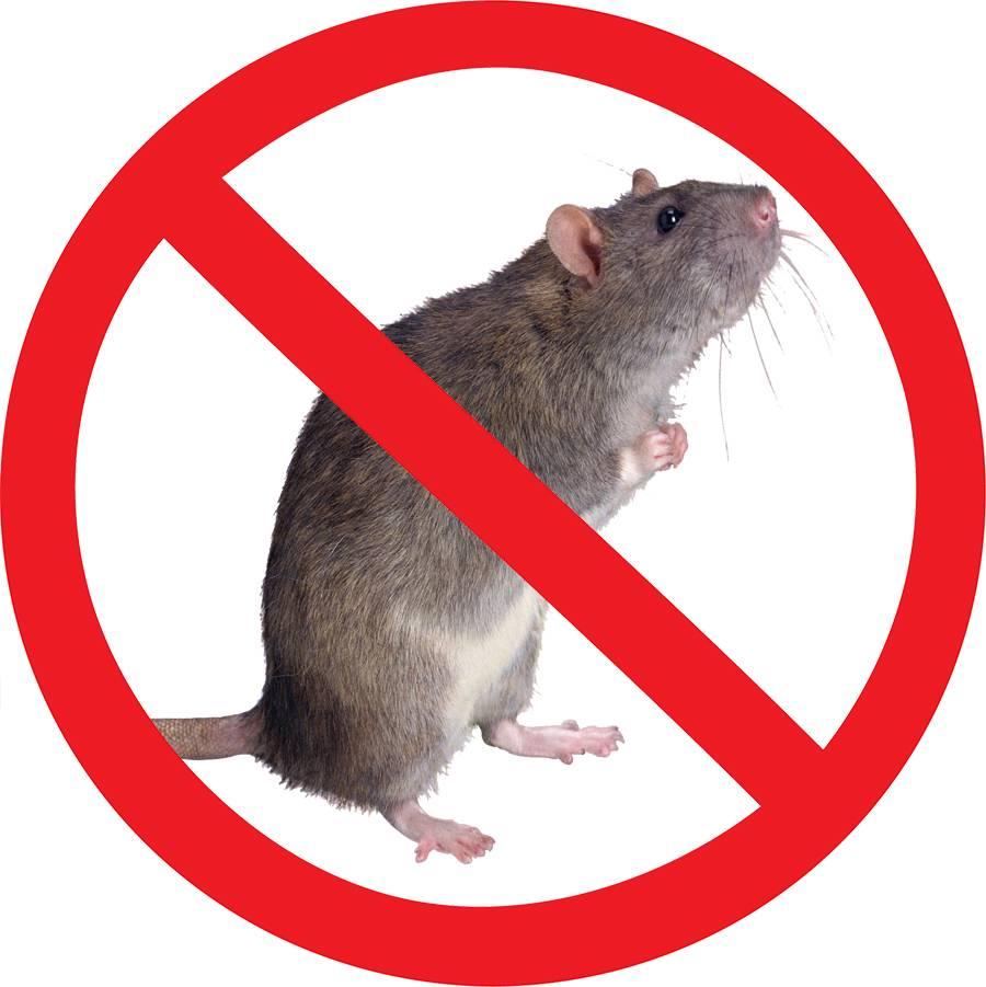 Борьба с крысами на предприятии. грызуны - это самые опасные вредители в мире