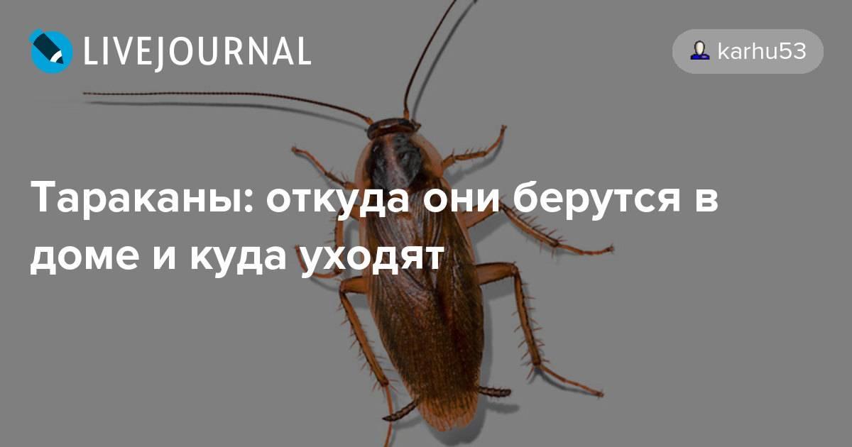 Почему и куда исчезли тараканы в квартирах. тревожный знак для людей. куда исчезли тараканы?