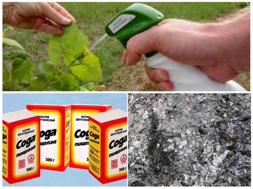 Применение дегтярного мыла против муравьев и тли