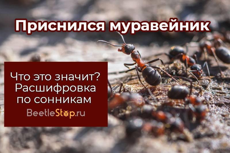 К чему снится муравей. видеть во сне муравей - сонник дома солнца