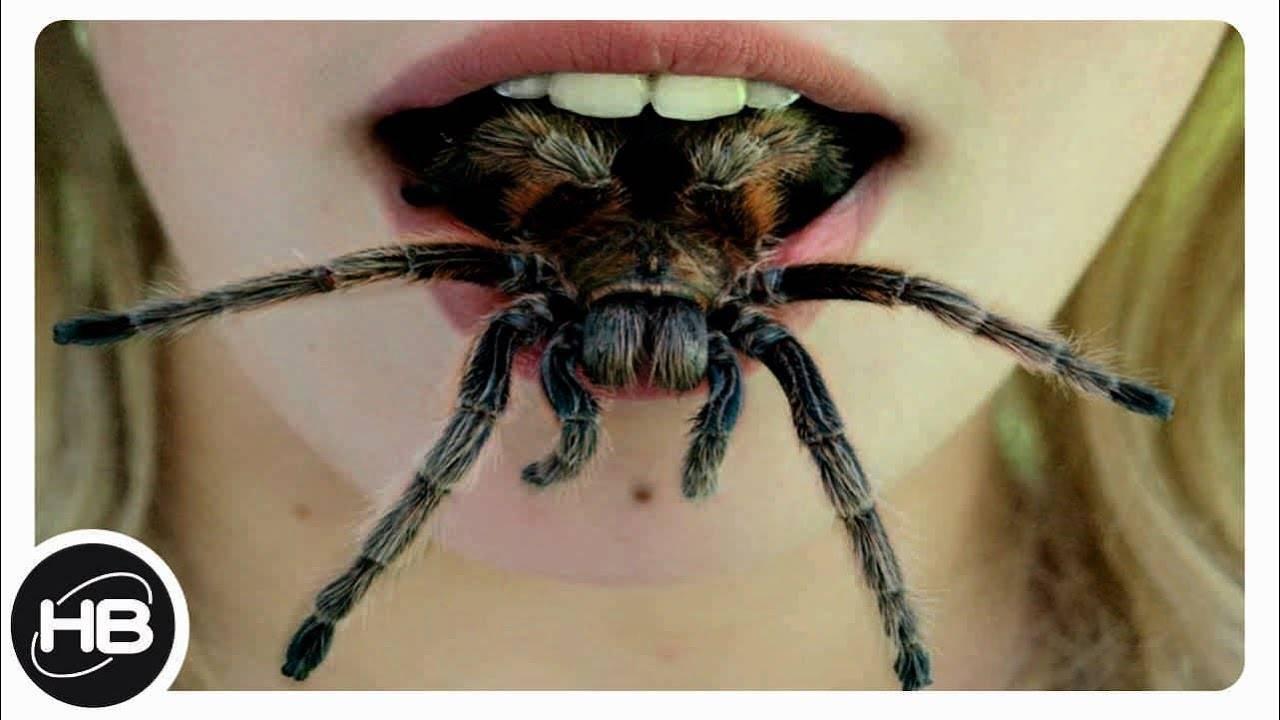 Самые опасные ядовитые пауки в мире