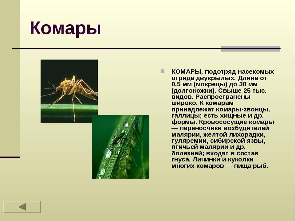 Самые опасные насекомые – список, чем опасны, названия, где водятся, фото и видео  - «как и почему»
