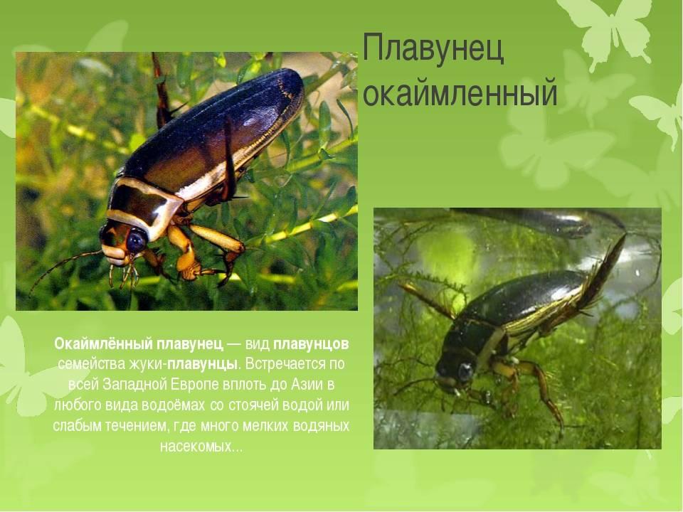 Как избавиться жуков плавунцов в бассейне: лучшие методики