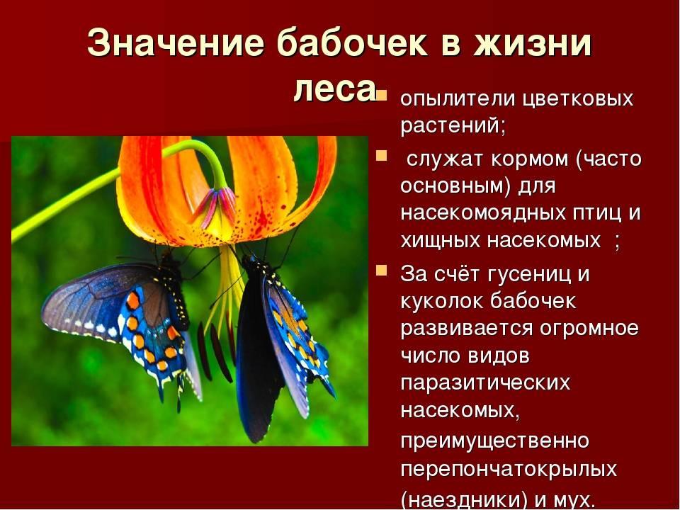 Чудеса из бабочкария