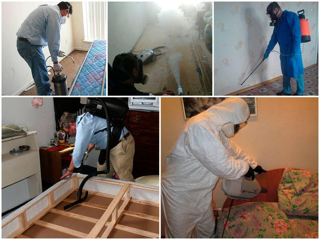 Как вывести клопов из квартиры своими силами быстро и эффективно - мужик в доме.ру