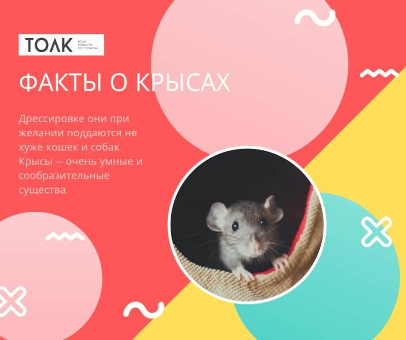 Удивительные факты окрысах, окоторых вынезнали (6фото)