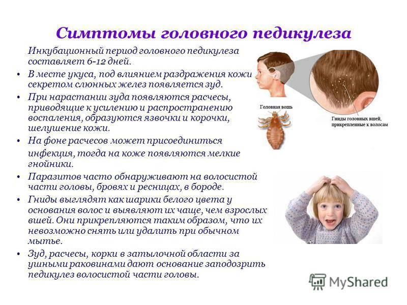 Профилактика педикулеза: избавляемся от вшей и гнид в домашних условиях