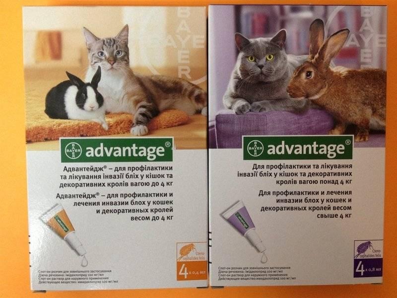 Способ применения капель адвантейдж: дозировка для кошки и котенка