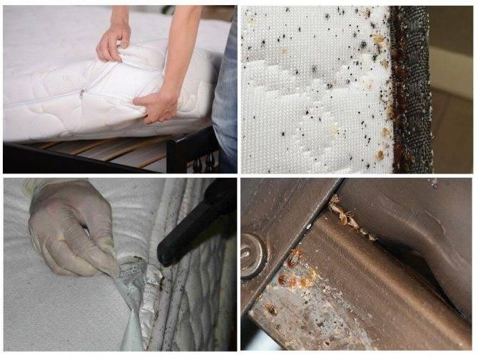 Как быстро обнаружить постельных клопов в квартире
