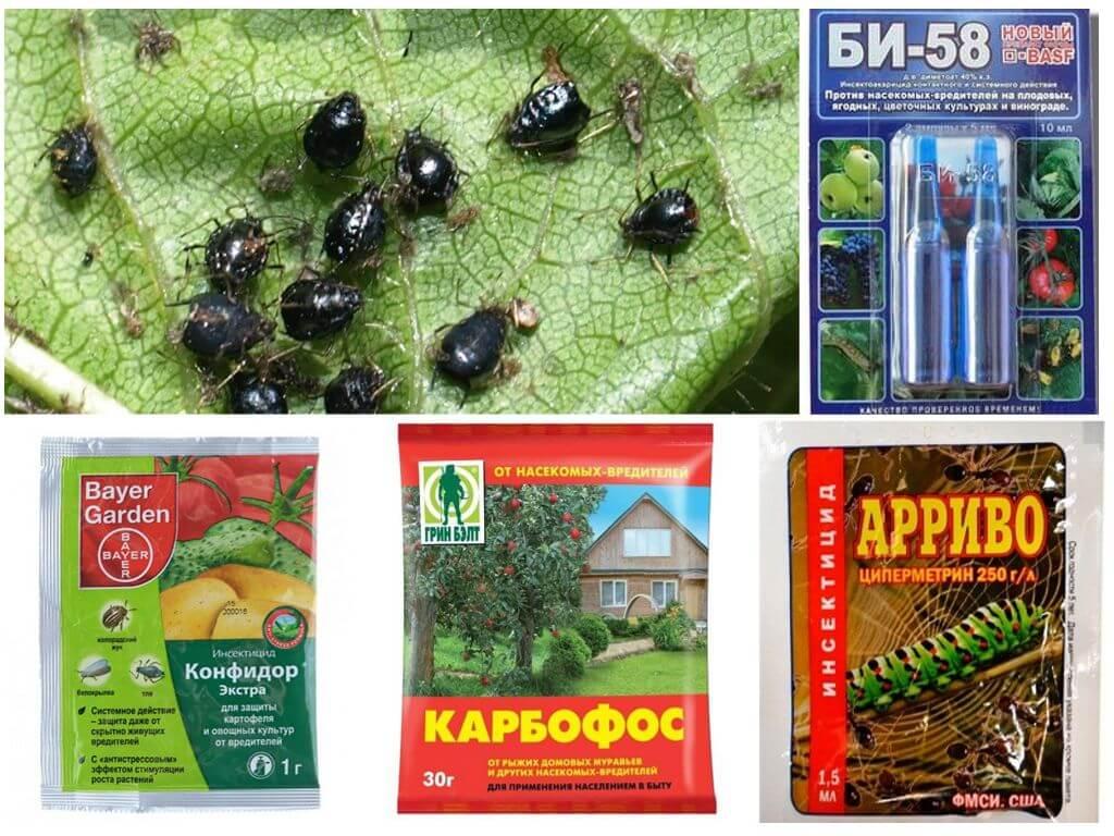 Средства от тли: как избавиться от тли в саду-огороде
