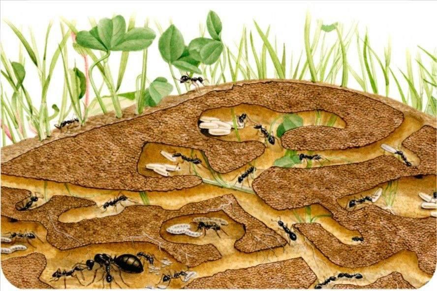С какой стороны дерева муравьи строят муравейники