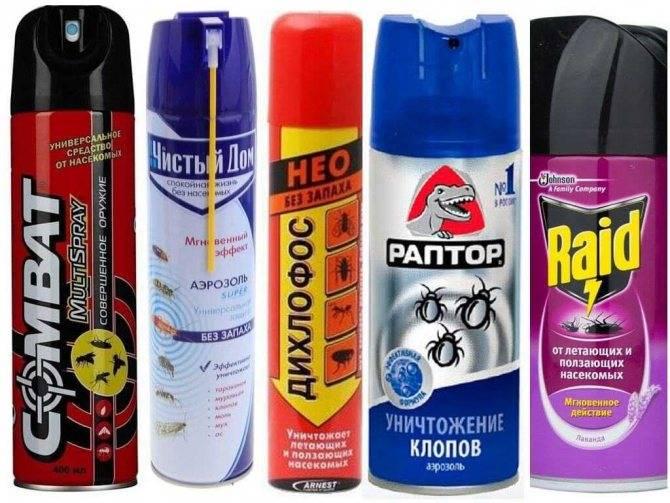 Аэрозоль для уничтожения ползающих и летающих насекомых — дихлофос нео без запаха: инструкция по применению и меры предосторожности