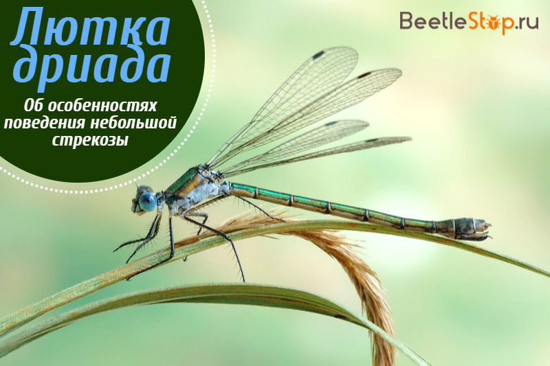 Краткая эколого-биологическая характеристика стрекоз. состояние изученности стрекоз и их видовой состав астраханской области - реферат