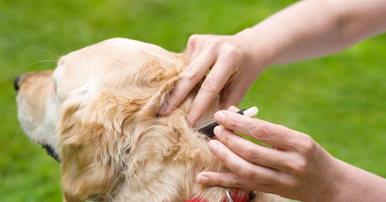 Средства от мух для животных - чем обработать собаке уши