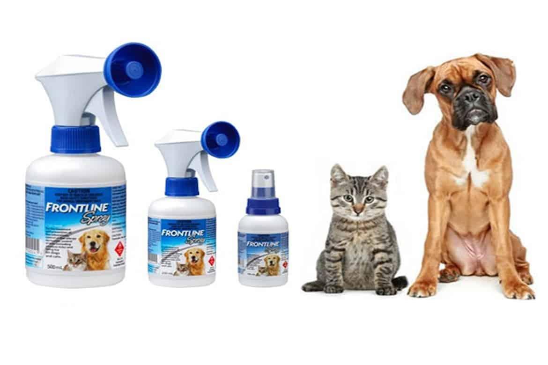Лучшие препараты для лечения блох у кошек