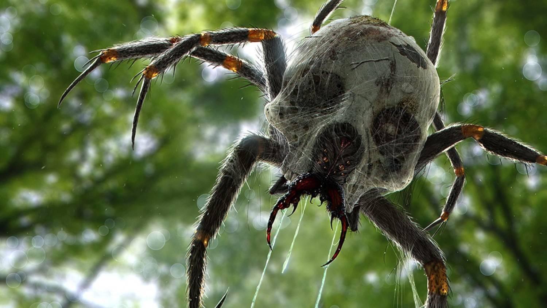 Топ 10: самые большие пауки в мире - фото, названия и размеры