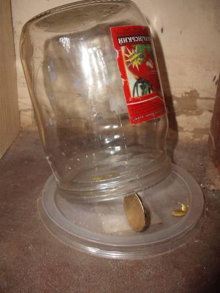 Как быстро поймать мышь в доме без мышеловки: способы, в бутылку, на клей в домашних условиях