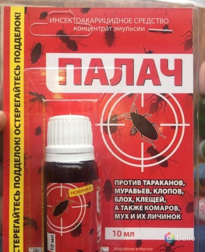 """Народные средства от тараканов в квартире: рецепты, как вывести """"усатых"""" навсегда, чего они боятся больше, чем травить эффективно и безопасно русский фермер"""