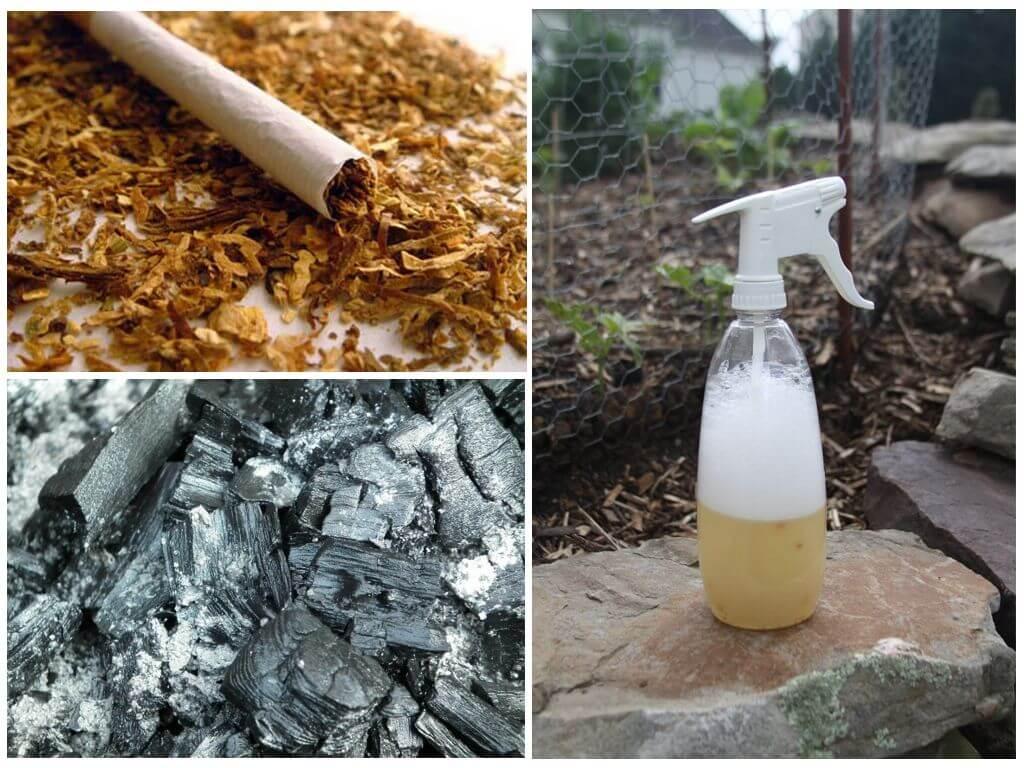 Табачная пыль - применение в садоводстве от вредителей, способы и эффективность