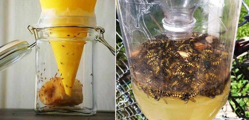 Как избавиться от мух в доме народными средствами: советы + фото