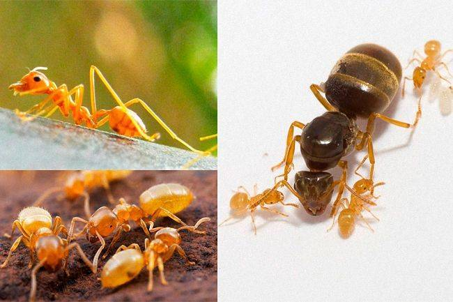 Маленький мир или факты из жизни муравьев – 30 фото