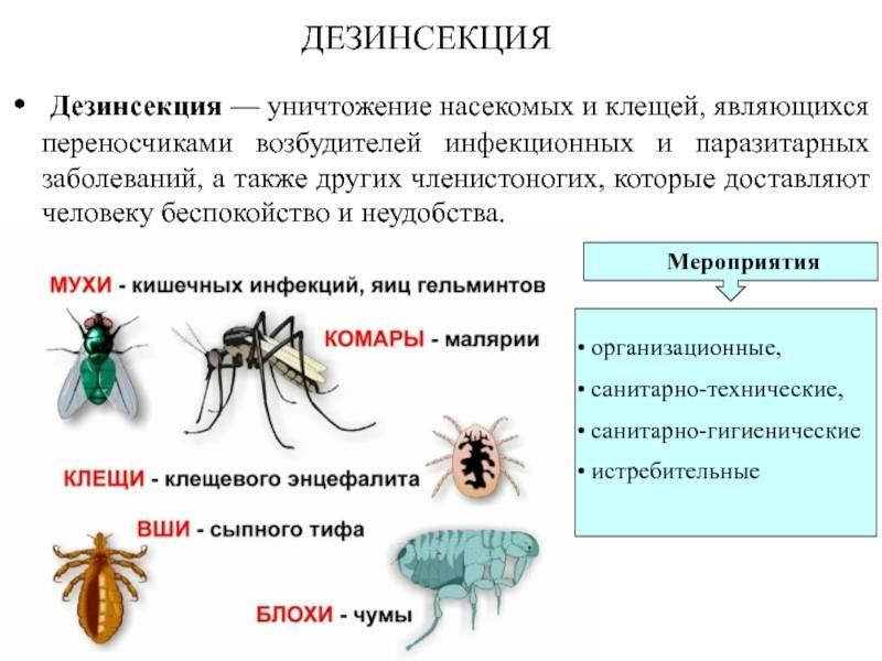 В чем заключается опасность тараканов