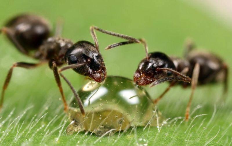 К чему снятся муравьи: толкование по старинным и современным сонникам