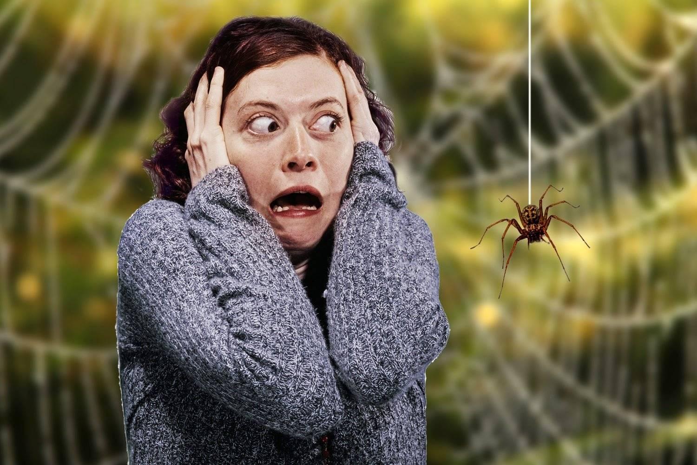 Боязнь тараканов — серьезная фобия или простой каприз?