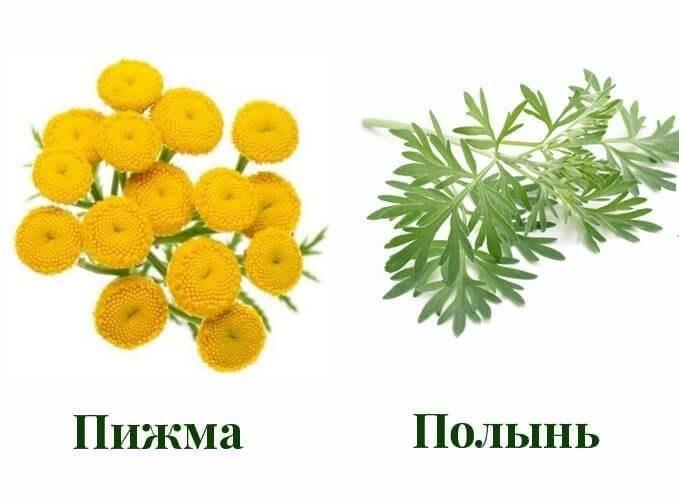 Народные средства от блох: дегтярное мыло, полынь, эфирные масла, соль и сода, травы, нашатырь и другие