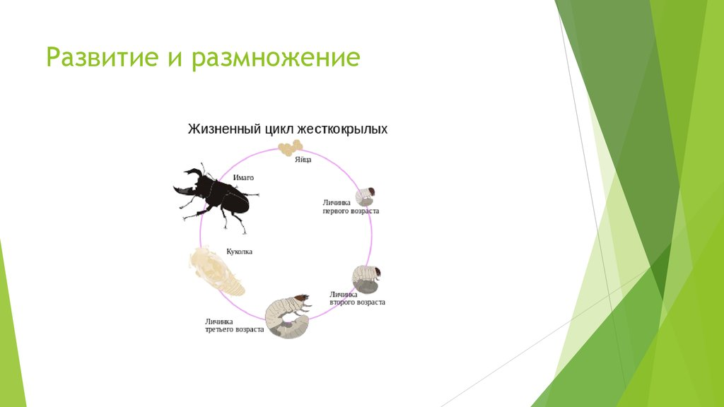 Откуда берутся мухи в закрытом помещении