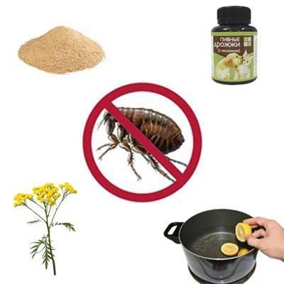 Какие растения отпугивают комаров – топ 5 репеллентов на грядке